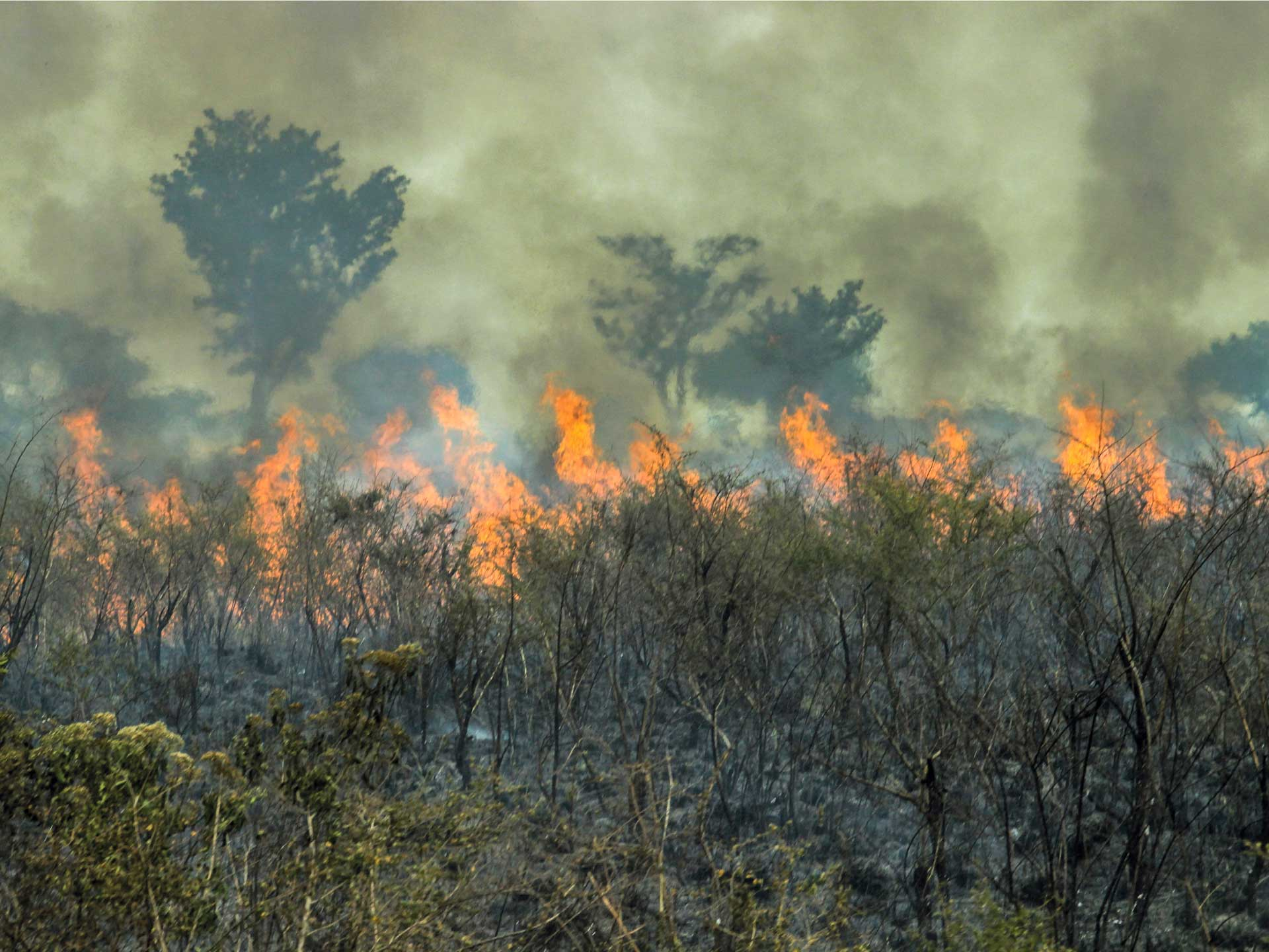 STUDY SHOWS THAT PARTS OF AMAZON ARE EMITTING MORE CARBON DIOXIDE THAN ITS ABSORBING
