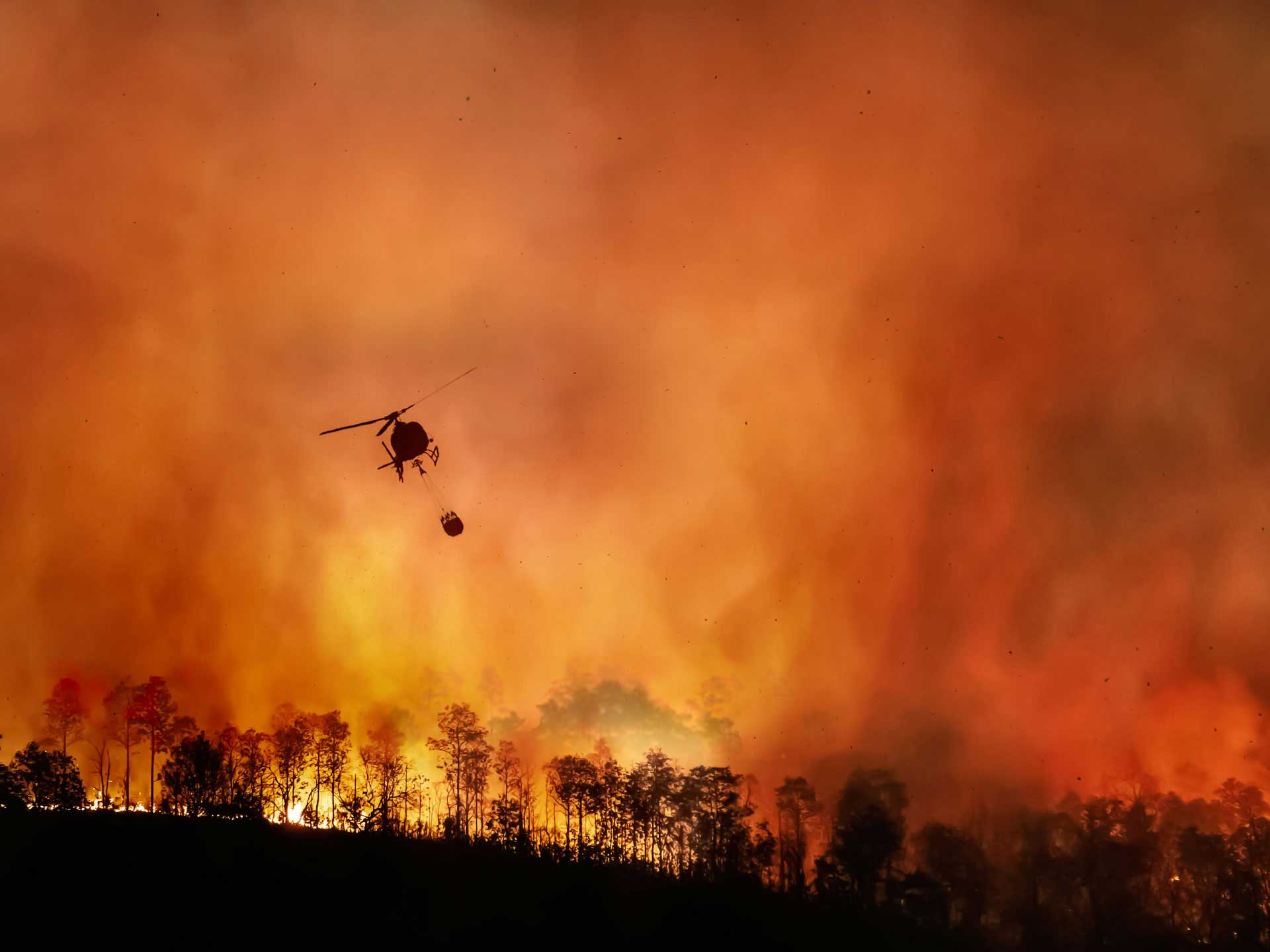 The West Is Sweltering due to Massive Wildfires